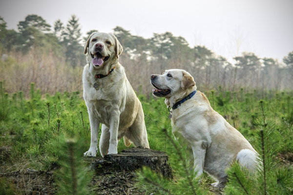 Vaccination of Dogs and Cats in Brevard, NC